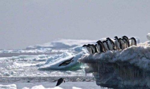 Antarktika'daki Penguen Mezarlığı
