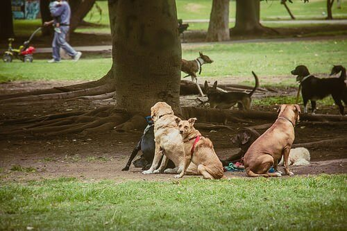 parkta köpekler fotoğrafı