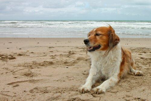 plajda oturan köpek