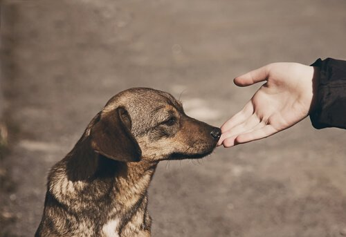 Tanımadığınız Bir Köpeğe Nasıl Yaklaşılır?
