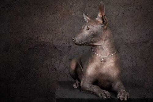 Köpeklerin İlham Kaynağı Olduğu 4 Şaheser