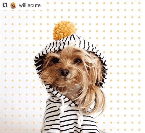 tatlı willie instagram sayfası