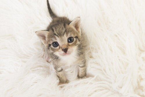 Yavru Kedi Bakımı: Bilmeniz Gerekenler