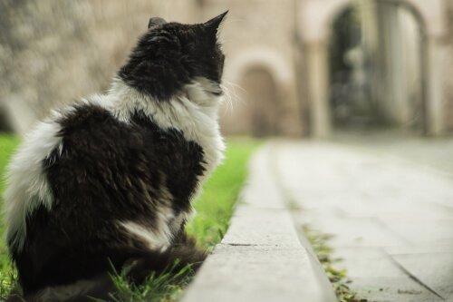 kediler şehrinde yol kenarında arkası dönük siyah beyaz kedi