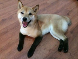 ayaklarında çizme olan köpek
