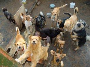 barınaktaki köpekler mutlu