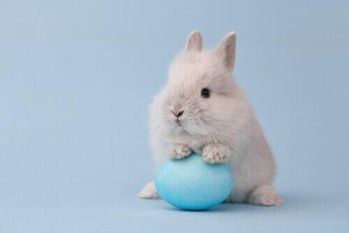 elinde oyuncağı olan beyaz tavşan ve cüce tavşanlar