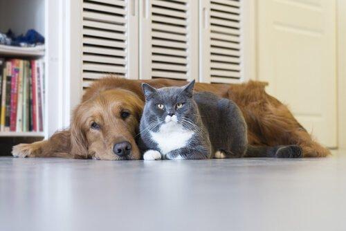Kediler ve Köpeklerde Ölümcül Hastalıklar