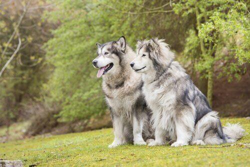 Erkek ve Dişi Köpekler Arasında Seçim Yapmak