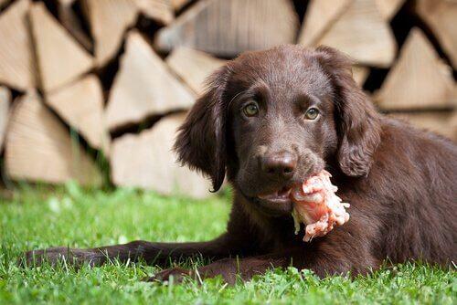 ağzında yemek olan köpek