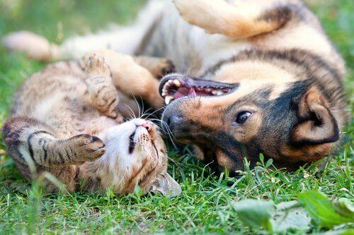 Evcil Hayvanınızı Kısırlaştırmak İçin Dört Neden