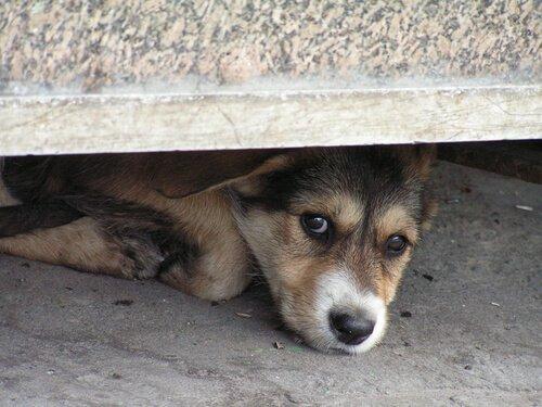 Fırtına Korkusu Olan Köpeklere Yardım Etmek