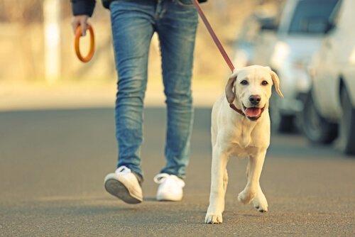 yürüyüşe çıkan köpek ve sahibi