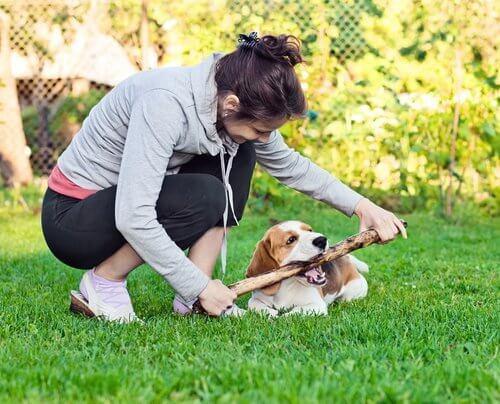 git getir oynayan köpek ve sahibi