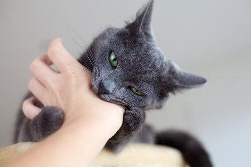 kedilerden bulaşan hastalıklar