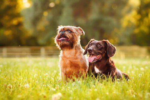 güneşli havada köpekler
