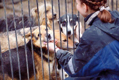Bir Hayvan Barınağında Gönüllü Olmak