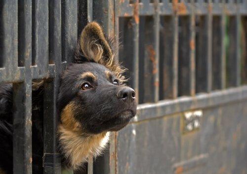 Bir Hayvanı Sahiplenmek İçin Gerekli Şartlar