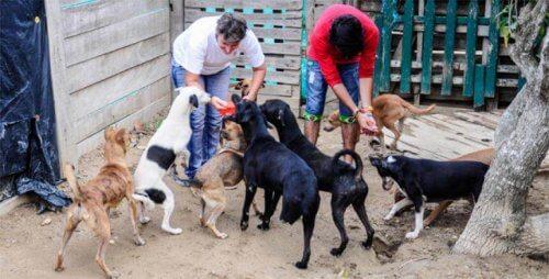 Hayvan Kurtarma Derneği Koruma Bölgesinden Çıkarıldı