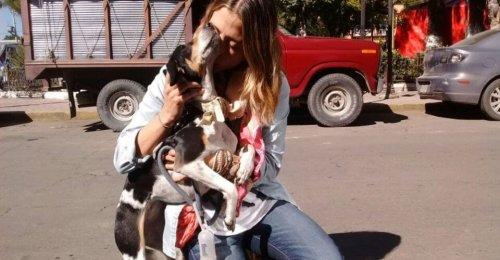 Hava Yolu Şirketinden Kayıp Köpek için 10 Ücretsiz Uçuş