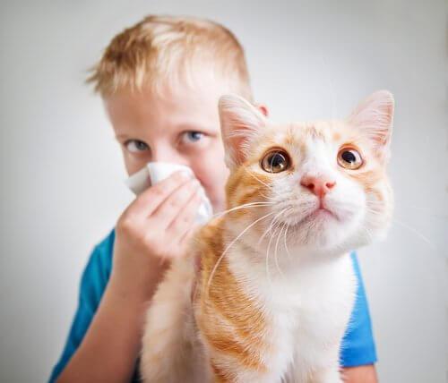 alerji geliştiren çocuk ve kedi