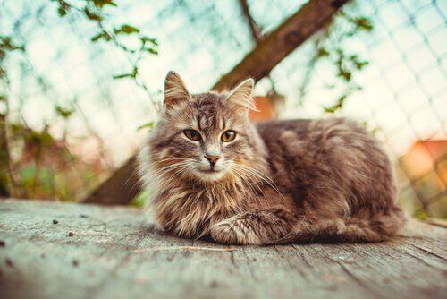 Yetişkin Bir Kedi Sahiplenmek İçin 10 Neden