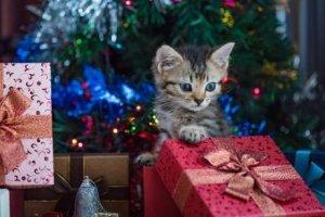 kedi ve hediyeler