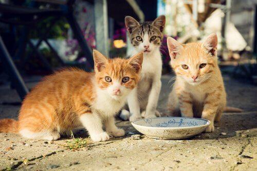 yemek yiyen kedi yavruları ve sokak kedileri