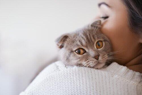 kedilerde ölümcül hastalıklar