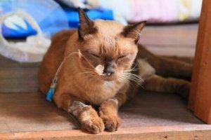 kediye serum bağlanmış