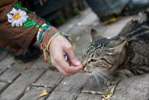 Sokak Kedileri İle Yakınlık Kurmak