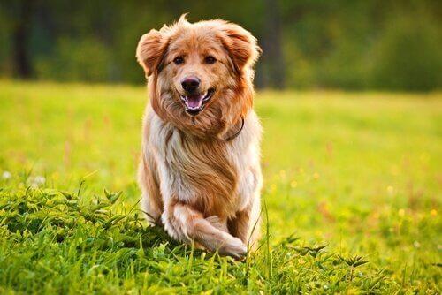 Köpeğinizin Kürkünü Güzelleştirmek İçin 10 İpucu