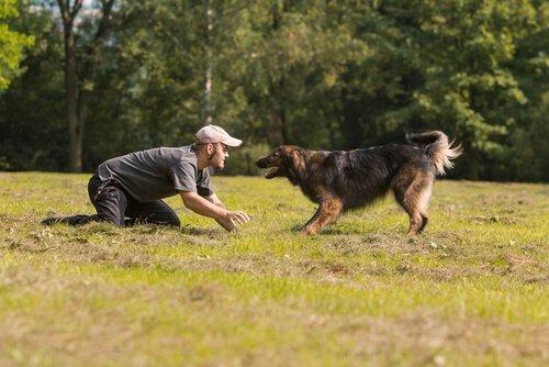 köpeğiyle parkta oyun oynayan adam