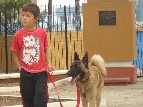 köpekler çocuklara öğretebilir
