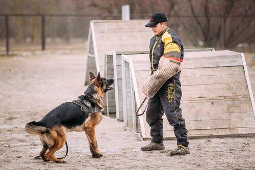 köpek ve eğitmeni