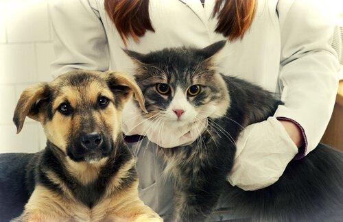 kedi ve köpek beraber kameraya bakıyor