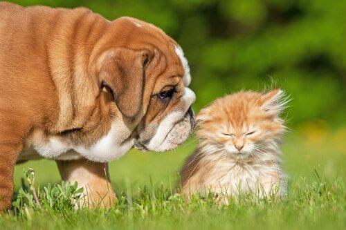 köpeğiniz varken kedi sahiplenmek