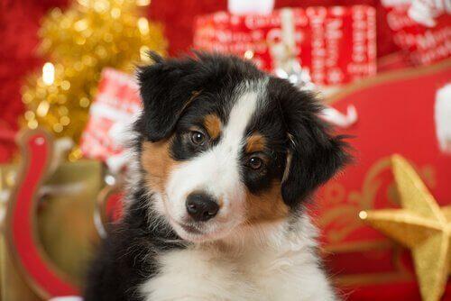 Tatilde Evcil Hayvanlarınıza Nasıl Bakmalısınız?