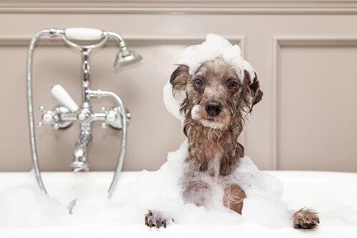 Kış Aylarında Köpek Yıkamak İçin Öneriler