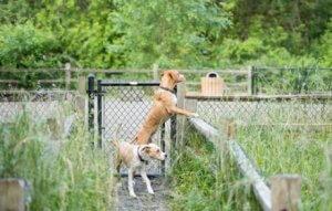 köpekler dışarıda geziyor