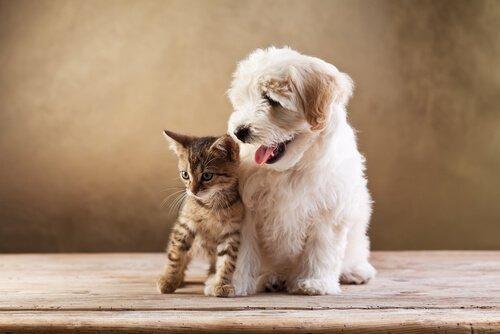 köpek ve kediler dost olur mu