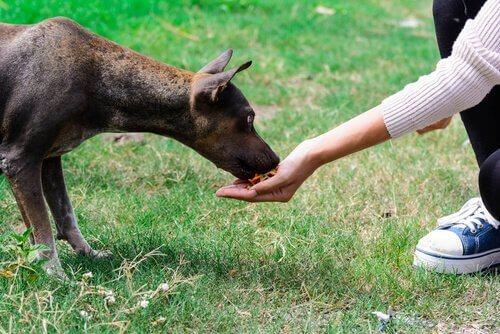 korkak köpek çocuğun elinden mama yiyor