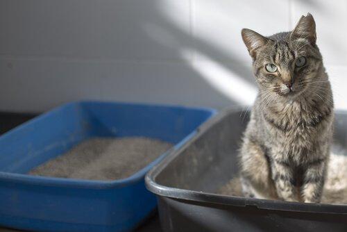 Kedi Tuvaleti Kokusunu Kontrol Etmede İpuçları