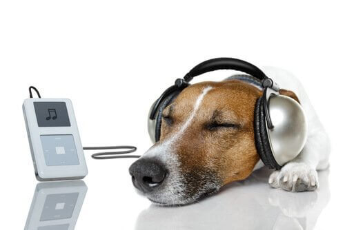 kulaklık takan köpek