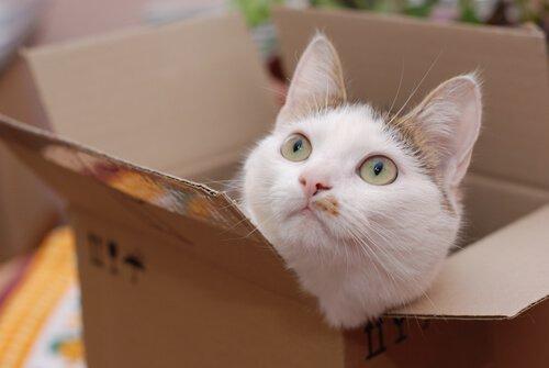 kediler ve karton kutular