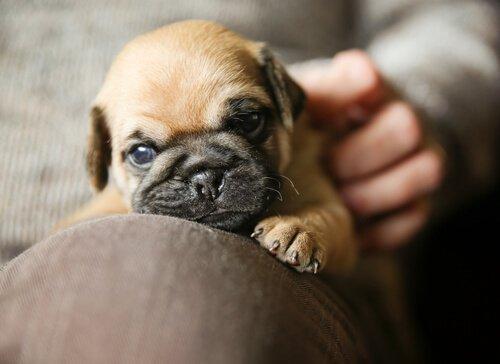 küçük köpeğim