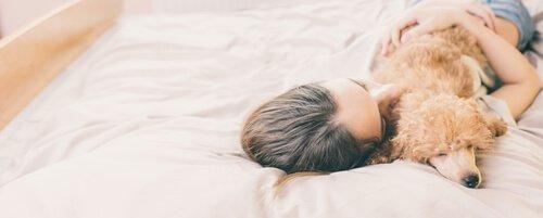 köpekler neden yatağında uyumak istemez