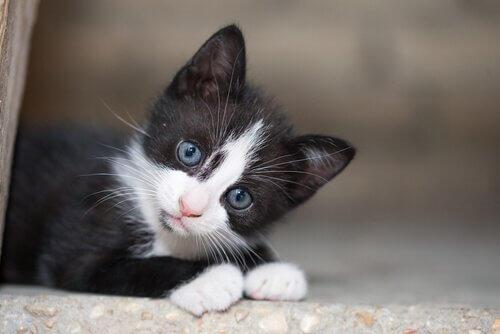 Sahipsiz Bir Kediyi Evlat Edinmek Üzerine Bir Rehber