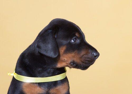 Sarı Köpek Projesi: Köpeklere Alan Tanımanın Önemi