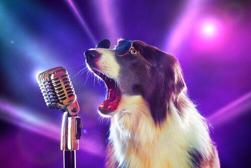 Köpekler Hakkında Duymadığınız 8 Şarkı